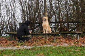 Alessandro e il cane