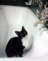 Il bagnetto di Gastone