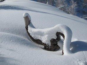 Uccello nella neve