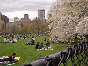 Relax a Central Park