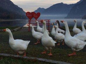 Oche alla panchina dell'amore