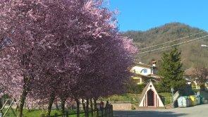 Primavera a Sabbio Sopra