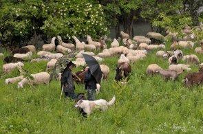 Pastori a Pompegnino