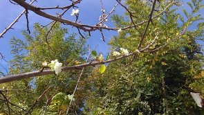In quel di Bione è già... primavera