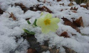 Primavera invernale sul Tesio