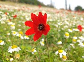 Primavera a Olimpia