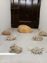 Museo delle conchiglie a Bellaria
