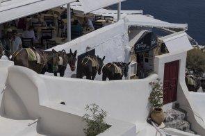 Asinelli a Santorini