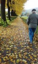 Nevicata di foglie d'autunno