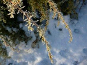 Brina e neve in valle Duppo