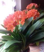 I fiori di Graziella