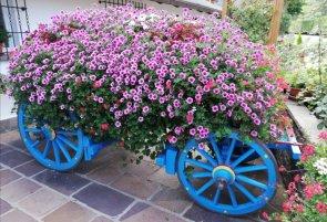Un carro di fiori