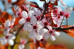Bellezza in fiore