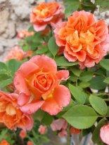 Bellezze arancioni