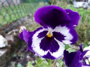 Giugno in fiore
