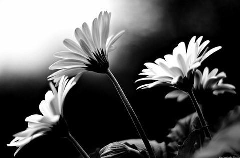 Sal buon compleanno pubudu for Sfondi bianco e nero tumblr