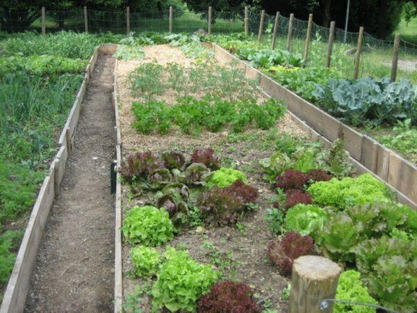 Sabbio chiese come coltivare l orto - L orto in giardino ...