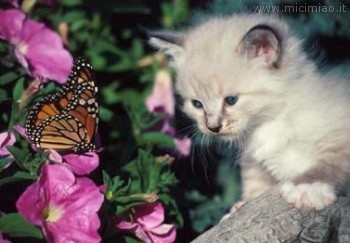 Farfalle for Sfondi con farfalle