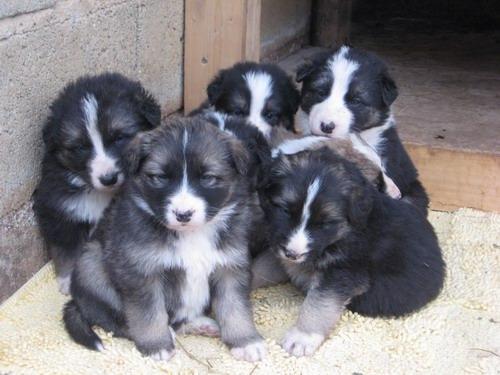 Risultati immagini per cuccioli da adottare