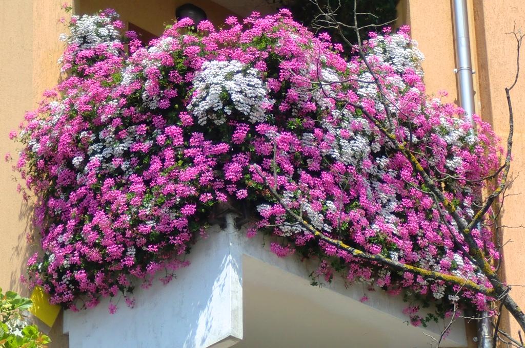 Agnosine balconi e giardini fioriti for Giardino invernale