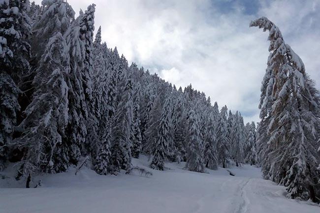 Bagolino - Ottantacinque capre nella neve - Valle Sabbia News